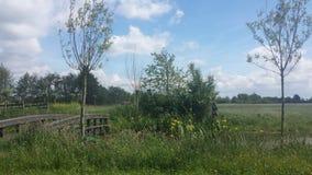 Kształtuje teren z drzewami trawa i most Obrazy Royalty Free