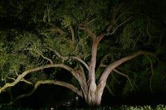 Kształtować teren - Dębowy drzewo Zaświecający Przy nocą Zdjęcie Stock