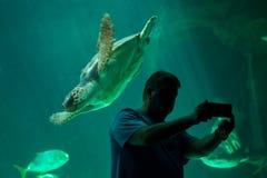 Kłótnia dennego żółwia Caretta caretta Zdjęcia Stock