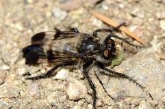 ktyr despredador de la mosca imagen de archivo