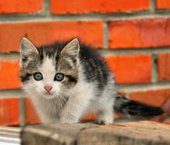 Kätzchen. Stockfotografie