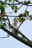 Kätzchen auf einem Baum Lizenzfreies Stockbild