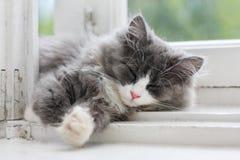 Kätzchen, das auf Fensterleiste schläft Stockfotos