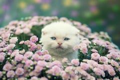 Kätzchen, das in den Blumen sich versteckt Stockbilder