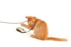 Kätzchen, das mit Computermaus spielt Lizenzfreie Stockbilder