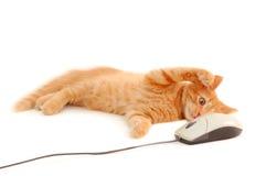 Kätzchen, das mit Computermaus spielt Lizenzfreie Stockfotos
