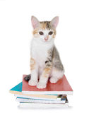 Kätzchen, das mit Stapel von Büchern sitzt Stockbilder