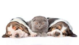 Kätzchen, das mit zwei Schlafenbassetwelpen liegt Lokalisiert auf Weiß Lizenzfreie Stockfotografie