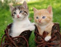 Kätzchen in den Matten Stockfotografie
