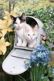 Kätzchen in einer Mailbox Stockbild