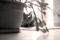 Kätzchen im Raum Stockfoto