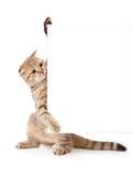 Kätzchen mit Schild oder Fahne für Ihren Text Lizenzfreies Stockfoto