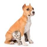 Kätzchen und Welpe, die zusammen sitzen Getrennt auf weißem Hintergrund Lizenzfreies Stockbild