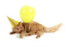 Kätzchenfeiertagsspiel mit Schutzkappengrünballon Lizenzfreie Stockfotos