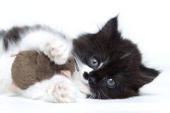 Kätzchenkatze, die mit einer Spielzeugmaus spielt Lizenzfreie Stockfotografie