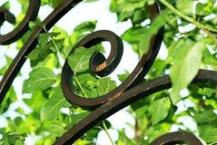 kuźni zieleni żelaza liść zdjęcia stock