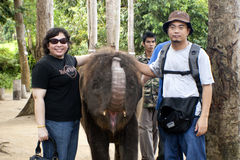 Kuala Gandah Elephant Orphanage Sanctuary Royalty Free Stock Photos
