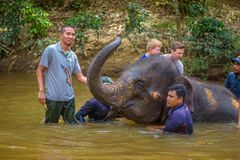 People bathing with a baby elephant Royalty Free Stock Photography