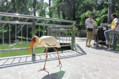 Kuala Lumpur Bird Park, Malaisie Photographie stock