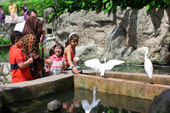Kuala Lumpur Bird Park Malaysia Royaltyfri Bild