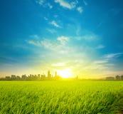 Reisfeldplantage und -stadt lizenzfreies stockbild