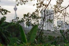 Kuala Lumpur, Maleisië - Januari 16, 2016: mening van de KL-toren van Torencommucation tussen palmen en installatie Royalty-vrije Stock Foto