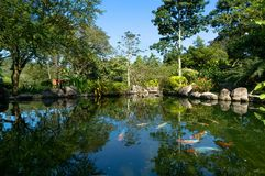 KUALA LUMPUR Park. The fish swims in a pond in a beautiful green Park in the heart of Kuala Lumpur, Malaysia stock photography