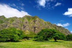 Kualoa大农场,奥阿胡岛峭壁和树  免版税库存照片