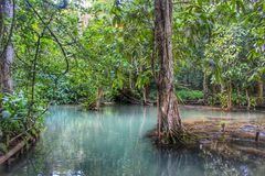 Kuang Si Waterfalls & stagno Fotografie Stock Libere da Diritti