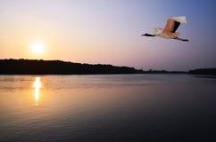 Kuantan-Fluss, Kuantan, Malaysia Lizenzfreies Stockbild