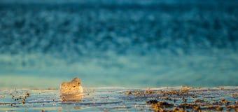 Kub för naturlig is Royaltyfria Bilder