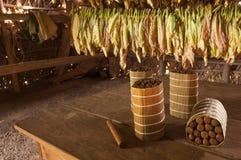 Kubańscy cygara w osuszka domu fotografia stock