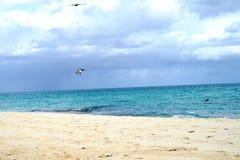 Kubański Ptasi połów Zdjęcia Royalty Free