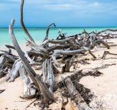 Kuba Cayo Jutias Stycken av trä över den vita sandiga stranden bildar en abstrakt naturlig modell arkivfoton
