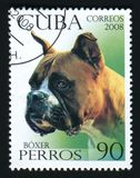 KUBA - CIRCA 2008: En stolpestämpel som skrivs ut i Kubashowbild av en boxare, circa 2008 Arkivfoto