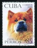 KUBA - CIRCA 2008: En stolpestämpel som skrivs ut i Kubashowbild av en Chow Chow, circa 2008 Arkivbild