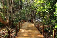 Kuba djungel royaltyfria foton