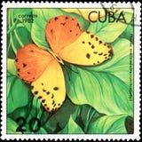 KUBA - OKOŁO 1982: Znaczek pocztowy drukujący Kuba pokazuje motyliego Phoebis Avellaneda Zdjęcia Stock