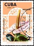 KUBA - OKOŁO 1974: Znaczek pocztowy drukujący w Kuba pokazuje kwiatu Anthurium andraeanum, seria kwiaty Zdjęcie Royalty Free