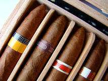 kubańskie cygara brown. Zdjęcia Royalty Free
