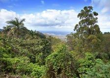 kuba Tropische Natur Lizenzfreie Stockfotos