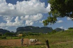 KUBA Valle de Viñales i Piñar del Rio de Janeiro Fotografering för Bildbyråer