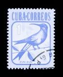 KubanEmerald Chlorostilbon ricordii, djurserie, circa 1981 Arkivbild