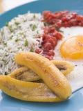 Kubaner-Art Reis stockbild
