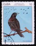 Kubanische Amsel taucht atroviolaceus, Stempel ist von der Reihe, circa 1977 Lizenzfreies Stockbild