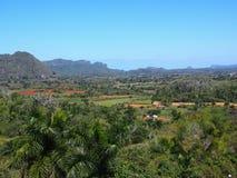 Kubanische Landschaft mit Palme Tdrees und Mogotes Lizenzfreies Stockfoto