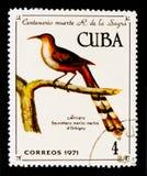 Kubanischer Eidechse-Kuckuck (Coccyzus merlini), 100. Ann vom Tod von R De-La-Sagra-serie, circa 1971 Stockbilder