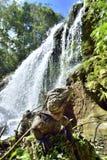 Kubanischer Leguan im Wald neben einem Wasserfall Lizenzfreie Stockfotos