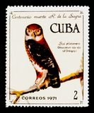 Kubanischer Sperlingskauz (Glaucidium-siju), 100. Ann vom Tod von R De-La-Sagra-serie, circa 1971 Stockfotografie