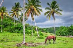 Kubanisches Pferd unter stürmischem Himmel Lizenzfreies Stockfoto